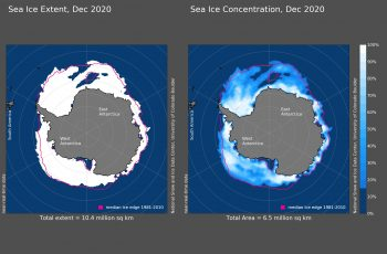 Figure 4a. Antarctic sea ice extent (left) for December 2020 was 10.4 million square kilometers (4.02 million square miles). Antarctic sea ice concentration (right) for December 2020 was 6.5 million square kilometers (2.51 million square miles). The magenta line shows the 1981 to 2010 average extent (left) and concentration (right) for that month. Sea Ice Index data. About the data||Credit: National Snow and Ice Data Center|High-resolution image