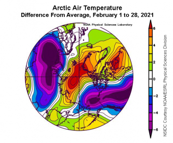 Figure 2b. This plot shows the departure from average air temperature in the Arctic at the 925 hPa level, in degrees Celsius, for February 2021. Yellows and reds indicate higher than average temperatures; blues and purples indicate lower than average temperatures. ||Credit: NSIDC courtesy NOAA Earth System Research Laboratory Physical Sciences Division |High-resolution image