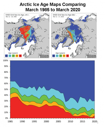 Figure 6. The top maps compare Arctic sea ice age for (a) March 12 to 18, 1985, and (b) March 11 to 17, 2020. The time series (c) of mid-March sea ice age as a percentage of Arctic Ocean coverage from 1985 to 2020 shows the nearly complete loss of 4+ year old ice; note the that age time series is for ice within the Arctic Ocean and does not include peripheral regions where only first-year (0- to 1-year-old) ice occurs, such as the Bering Sea, Baffin Bay, Hudson Bay, and the Sea of Okhotsk||Credit: W. Meier, NSIDC|High-resolution image