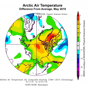 Figure 2b. This plot shows the departure from average air temperature in the Arctic at the 925 hPa level, in degrees Celsius, for May 2019. Yellows and reds indicate higher than average temperatures; blues and purples indicate lower than average temperatures. ||Credit: NSIDC courtesy NOAA Earth System Research Laboratory Physical Sciences Division|High-resolution image