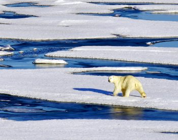Figure 5b. The team has spotted their first sighting of a polar bear. |Credit: A. Khan ||