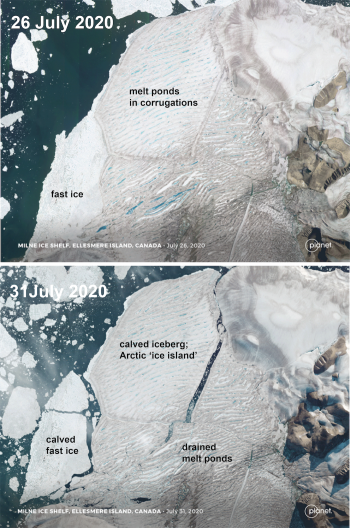 Figure 6. These images from Planet image data, show the break-up of the Milne Ice Shelf located in northern Ellesmere Island; the large pieces seen in the 31 July image are now adrift in the Beaufort, and are much thicker that multi-year sea ice. The Canadian Ice Service is tracking the larger pieces. ||Credit: Planet, and Chris Shuman| High-resolution image