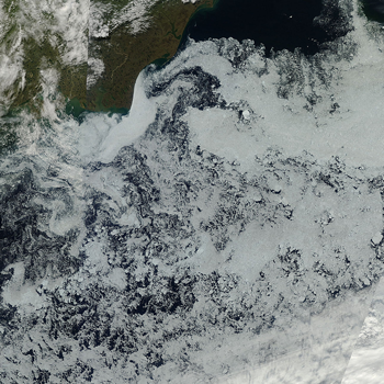 MODIS image of sea ice