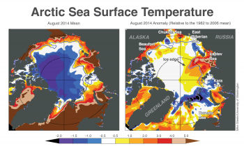 "Figure 4. These maps show Arctic sea surface temperatures (left) and temperature anomalies (right) for August 2014, in degrees Celsius. Sea surface temperature data are from the National Climatic Data Center (NCDC) OIv2, otherwise known as the ""Reynolds"" data set, a blend of satellite (Advanced Very High Resolution Radiometer) and in situ data designed to provide a ""bulk"" or ""mixed layer"" temperature. Ice edge data are from the NSIDC Near-Real Time passive microwave data.