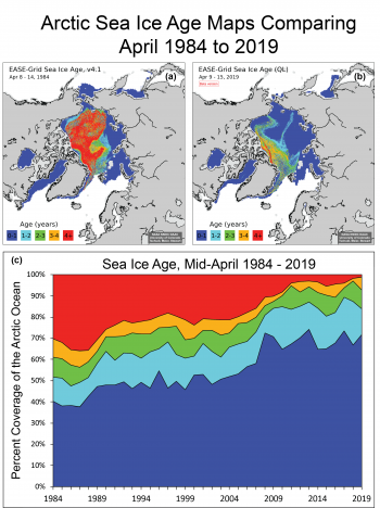 Figure 4. Maps (a) and (b) compare Arctic sea ice age between two date ranges: April 8 to 14, 1984, and April 9 to 15, 2019. Graph (c) shows sea ice age as a percentage of Arctic Ocean coverage from 1984 to 2019 in mid-April. ||Credit: W. Meier, NSIDC|High-resolution image