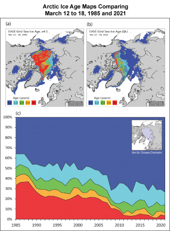 Figure 4. Sea ice age map for March 12 to 18 (a) 1985 and (b) 2021; (c) the 1985 to 2021 time series of percent coverage of the Arctic Ocean domain (inset map, purple shaded region). ||Credit: W. Meier, National Snow and Ice Data Center| High-resolution image