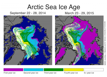 Figure 5. These ice age maps show a change in distribution of older ice from just after the summer 2014 melt season (left) and the end of March 2015 (right). ||Credit: NSIDC courtesy J. Maslanik and M. Tschudi, University of Colorado|  High-resolution image