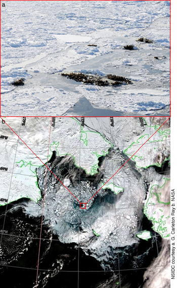figure 5: seals on sea ice and a satellite map