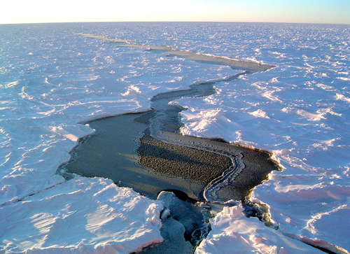 Image result for what is sea ice