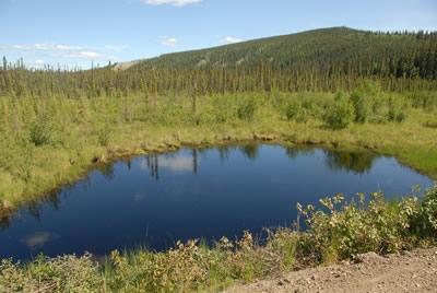 Boreal Bog lake in Alaska