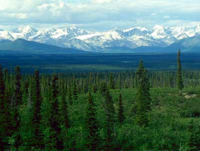 Taiga in Alaska