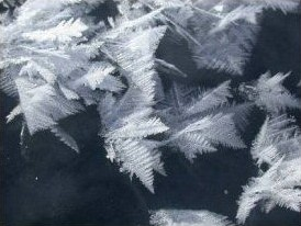 frost flowers grown on new ice