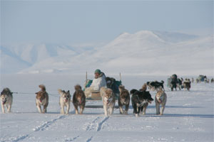 Man driving a sled dog team