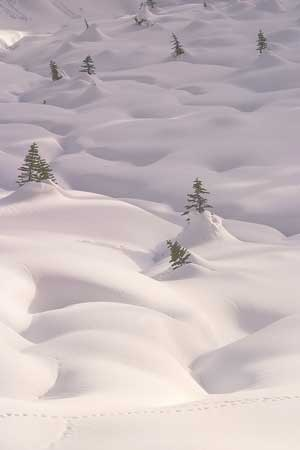 Snow drifts in Mount Rainier National Park