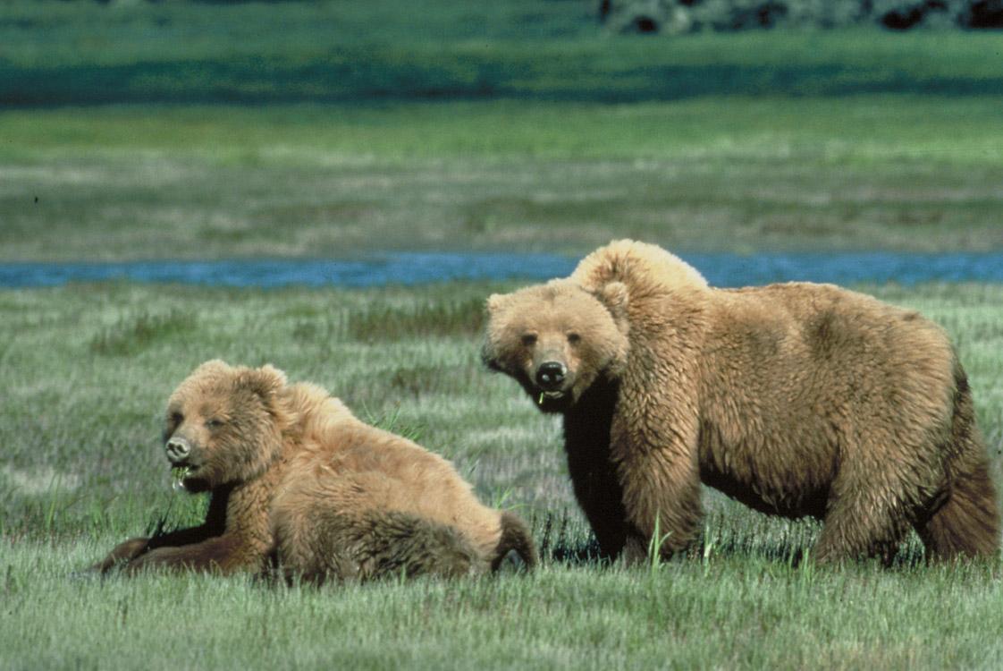 bears - photo #27
