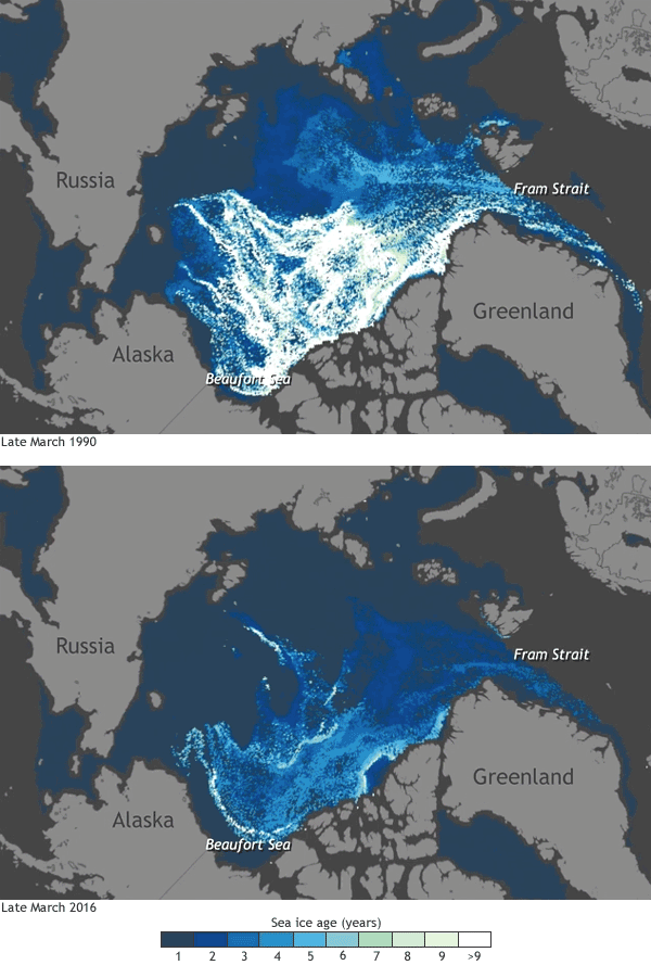 Old v. new ice in Arctic