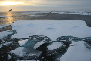 Sea ice photograph