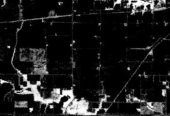 Sample NDVI image