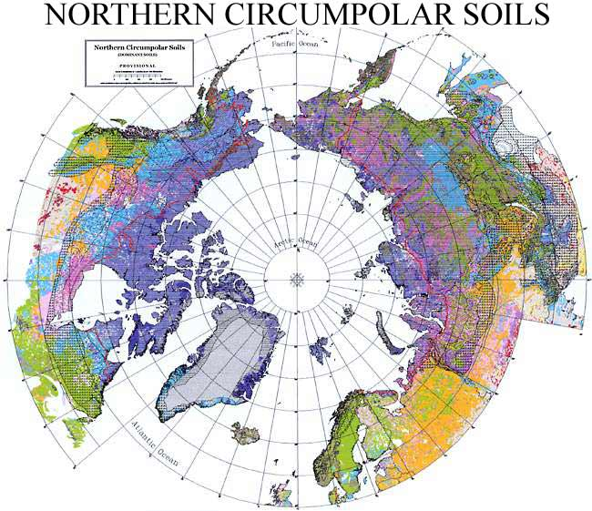 Browse map of Northern Circumpolar Soils