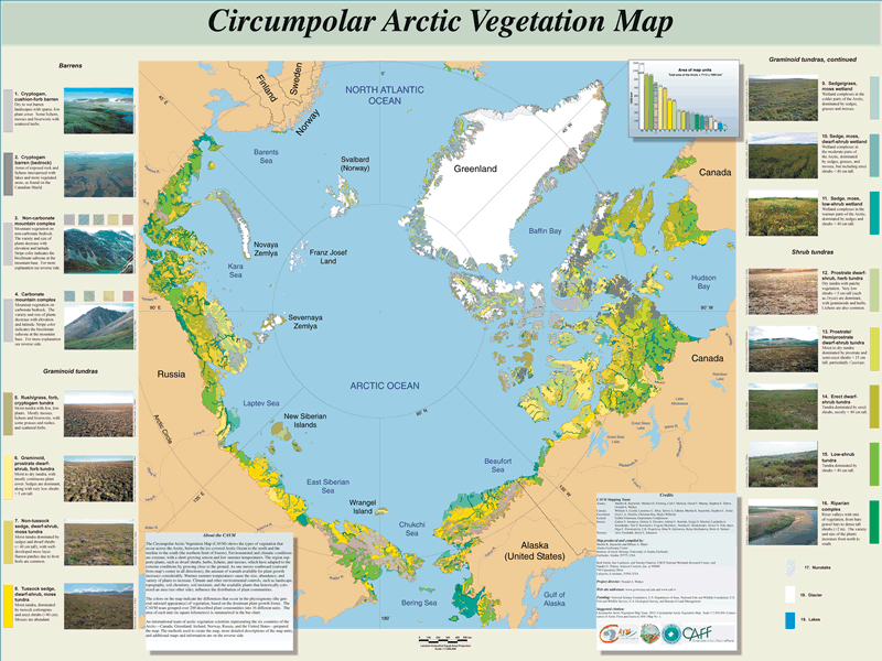 Browse map of Circumpolar Arctic Vegetation Map