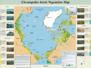 Circumpolar Arctic Vegetation Map  thumbnail