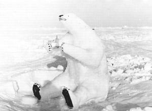 "Not all of the ice phenomena on the ice floes were naturally occurring. Station members sometimes made the most of their surroundings, witnessed in this polar bear made of snow. Image credit: EWG. (<a href=""/cryosphere/gallery/photo/34102"">View photo detail.</a>) <br>"