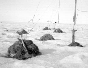 "Instrument masts were insulated using mounds of hay to help keep them upright and prevent the snow from melting out from around them. Image credit: EWG. (<a href=""/cryosphere/gallery/photo/34103"">View photo detail.</a>) <br>"