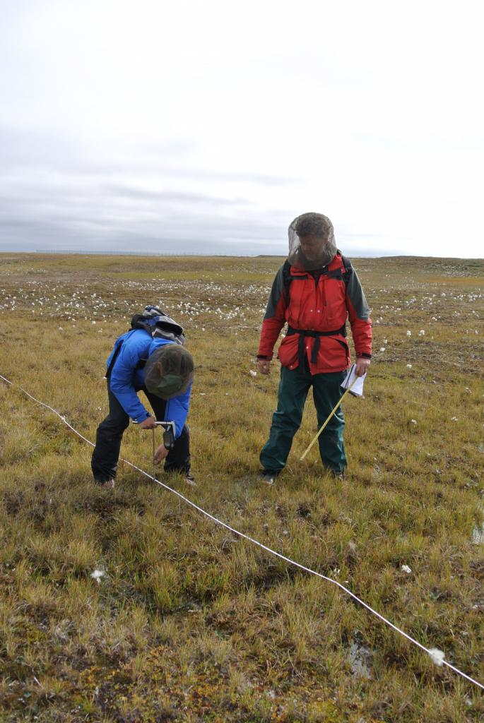 "Lin Liu and Kevin Schaefer use a metal probe to measure the active layer depth along a survey line near Barrow, Alaska. (Credit: Andy Parsekian) (<a href=""/cryosphere/gallery/photo/34153"">View photo detail.</a>) <br>"