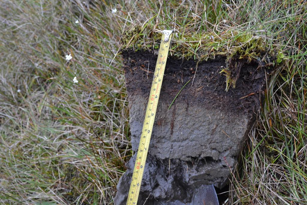 "This plug of turf dug up near Barrow, Alaska shows a typical soil profile in tundra.  The vegetation consists of moss and grass. A layer of dark brown organic matter extends down to a depth of 10 centimeters and beneath the organic layer is fine silt (Credit: Elchin Jafarov, NSIDC). (<a href=""/cryosphere/gallery/photo/34152"">View photo detail.</a>) <br>"