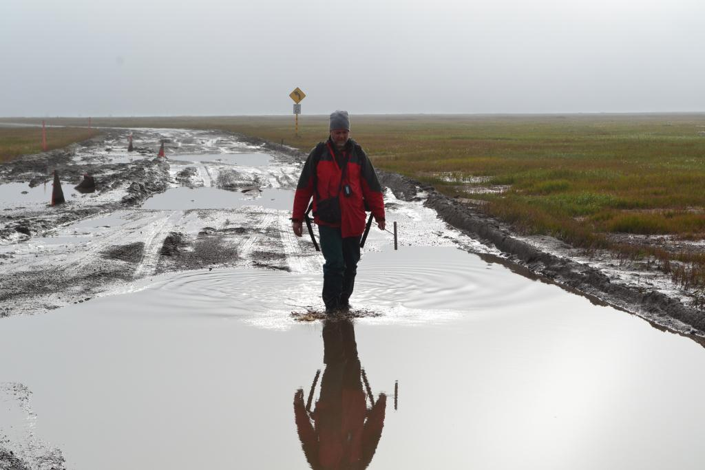 "Kevin Schaefer walks along the road to a next survey site near Barrow Alaska on August 11, 2013. Contrary to what the sign says, the effective speed limit was actually 5 mph (Credit: Elchin Jafarov, NSIDC). (<a href=""/cryosphere/gallery/photo/34155"">View photo detail.</a>) <br>"