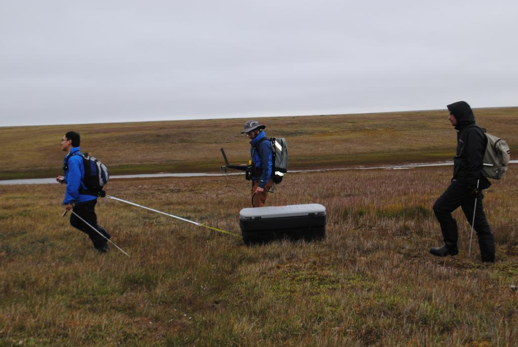 "Lin Liu, Andy Parsekian, and Elchin Jafarov pull a ground penetrating radar unit through the tundra near Barrow, Alaska on August 10, 2013. The radar unit is in the box and the computer records the active layer depth (Credit: Kevin Schaefer, NSIDC). (<a href=""/cryosphere/gallery/photo/34160"">View photo detail.</a>) <br>"