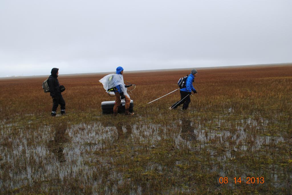 "Lin Liu pulls a ground penetrating radar unit through the tundra in rainy weather as Andy Persekian and Elchin Jafarov follow behind. The survey near Barrow, Alaska measures active layer depth. The radar unit (in the box) emits a pulse which reflects off the permafrost to measure the active layer depth, which is recorded in the computer held by Andy Parsekian. (Credit: Kevin Schaefer, NSIDC) (<a href=""/cryosphere/gallery/photo/34163"">View photo detail.</a>) <br>"