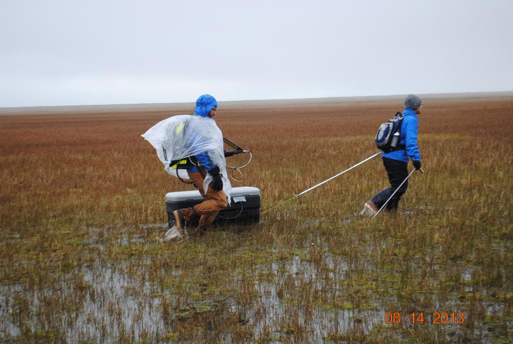"Lin Liu pulls a ground penetrating radar unit through the tundra in rainy weather. The survey near Barrow, Alaska measures active layer depth. The radar unit (in the box) emits a pulse which reflects off the permafrost to measure the active layer depth, which is recorded in the computer held by Andy Parsekian. (Credit: Kevin Schaefer, NSIDC) (<a href=""/cryosphere/gallery/photo/34166"">View photo detail.</a>) <br>"
