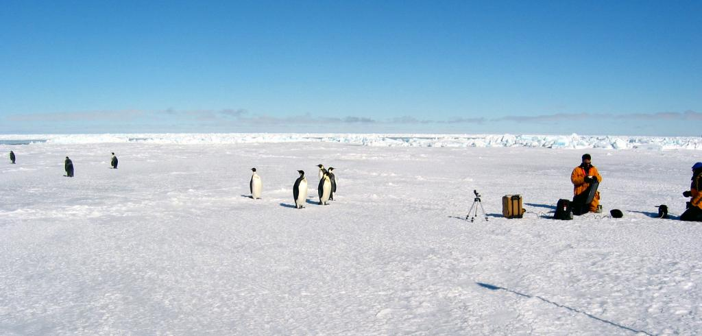 "While out in the field, the crew had some feathered bystanders (emperor penguins) watching from an unusually close distance. Photo Credit: Courtesy Ted Scambos, NSIDC (<a href=""/cryosphere/gallery/photo/33211"">View photo detail.</a>) <br>"