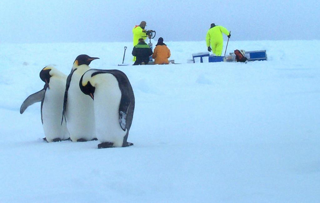 "A few emperor penguins hanging around the camera while the team is hard at work in the field. Photo Credit: Courtesy Ted Scambos, NSIDC (<a href=""/cryosphere/gallery/photo/33222"">View photo detail.</a>) <br>"