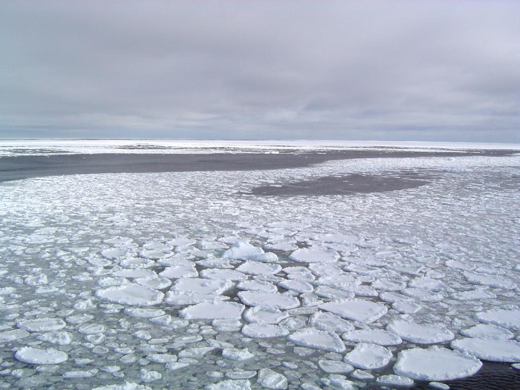 "One of several visual examples of pancake ice, otherwise known as cake ice. Photo Credit: Courtesy Ted Scambos, NSIDC (<a href=""/cryosphere/gallery/photo/33239"">View photo detail.</a>) <br>"