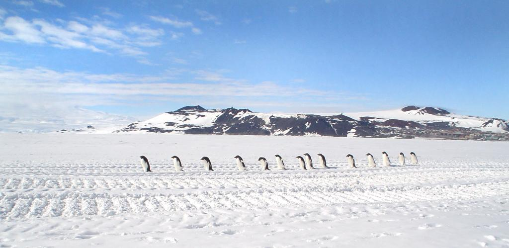 "A group of Adelie penguins trekking across Scott Coast.IImage Credit: Courtesy Ted Scambos and Rob Bauer, NSIDC  <a href=""http://nsidc.org/antarctica/megadunes/"">Megadunes Web site</a> (<a href=""/cryosphere/gallery/photo/33047"">View photo detail.</a>) <br>"