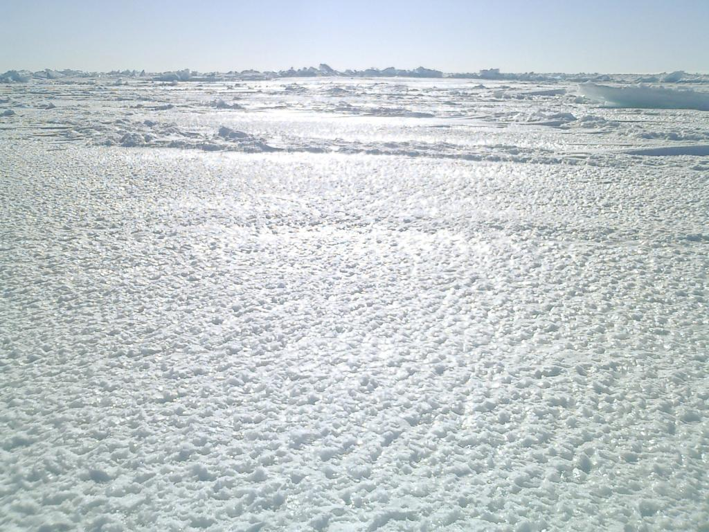 "Pictured here is an example of thin sea ice, glistening beneath the Antarctic sunlight. Photo Credit: NSIDC Courtesy Anthony Petty (<a href=""/cryosphere/gallery/photo/33310"">View photo detail.</a>) <br>"