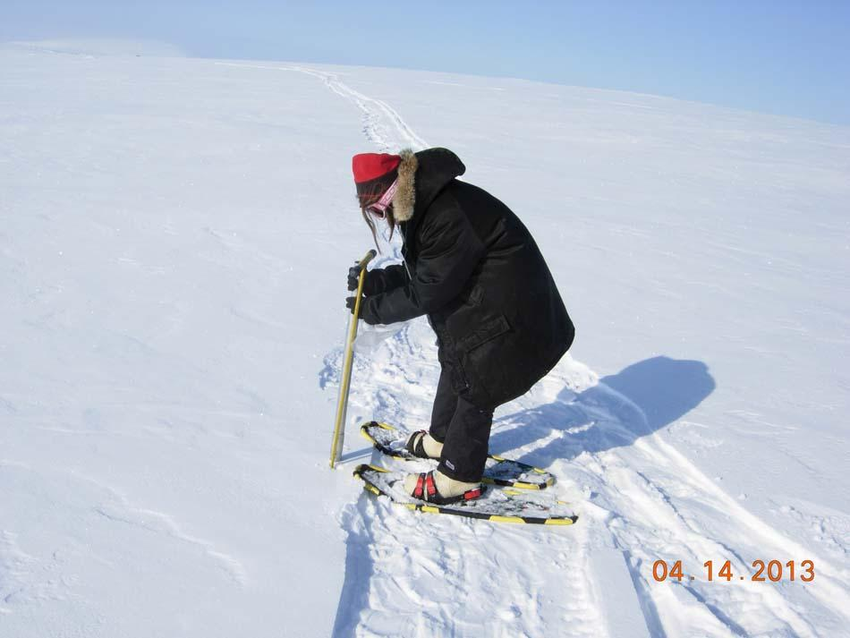 "A researcher measures snow depth during the 2013 Arctic Observing Network (Snownet) project in Alaska's North Slope. (<a href=""/cryosphere/gallery/photo/34118"">View photo detail.</a>) <br>"
