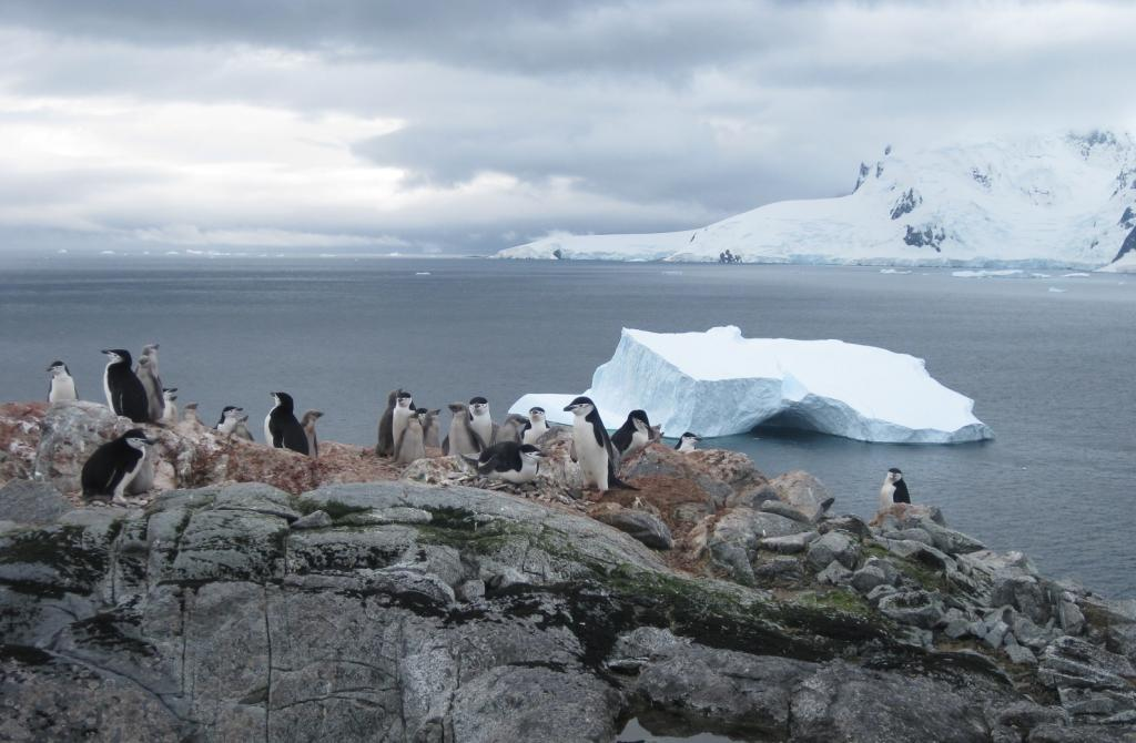 "Chin strap penguins go about their business, with an iceberg in the background (<a href=""/cryosphere/gallery/photo/33953"">View photo detail.</a>) <br>"