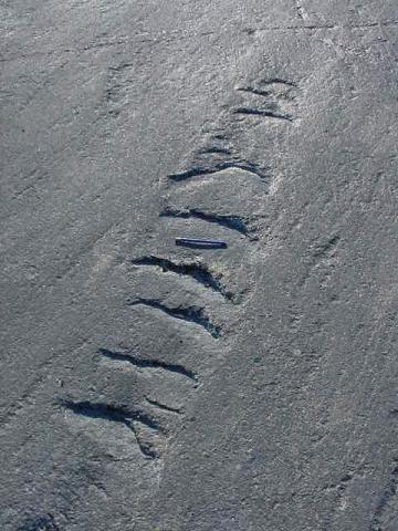Photograph of chatter marks