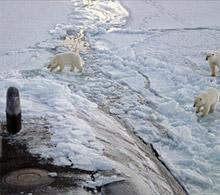 Polar bears inspect sub